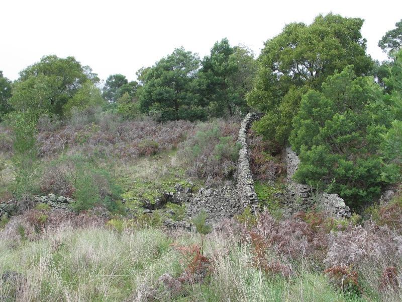 Bessiebelle sheepwash 2008