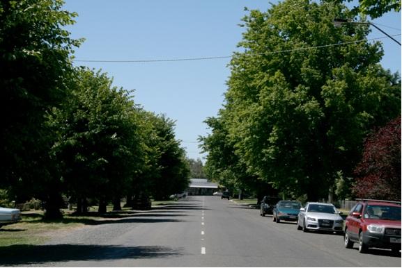 Trentham Avenue of Honour Cosmo Rd looking north 2011.jpg