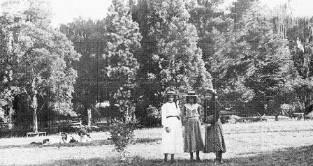 G13077 Buninyong Botanical Gardens c1903