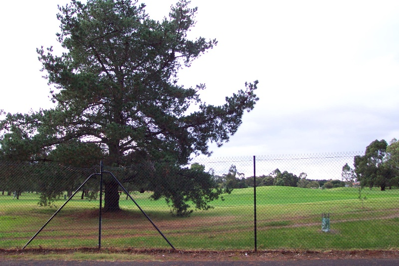 'Dairy Tree', site of the former Melton water bore
