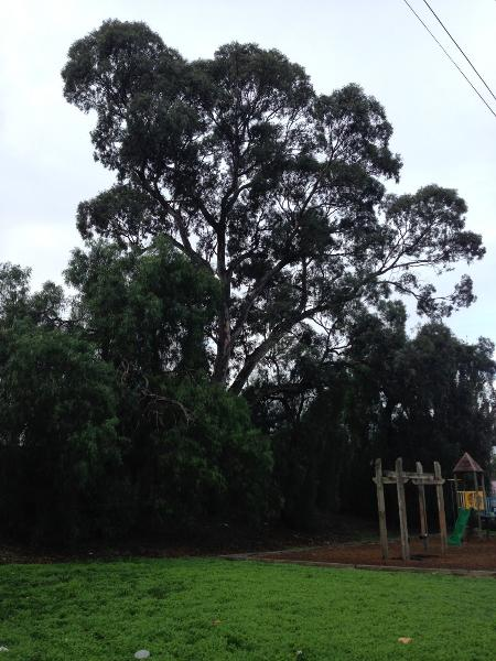 Newmarket Railway Station mature trees on west side