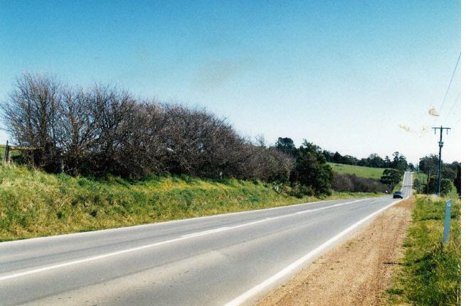Hawthorn Hedges near Wellers Pub Kangaroo Ground Colour - Shire of Eltham Heritage Study 1992