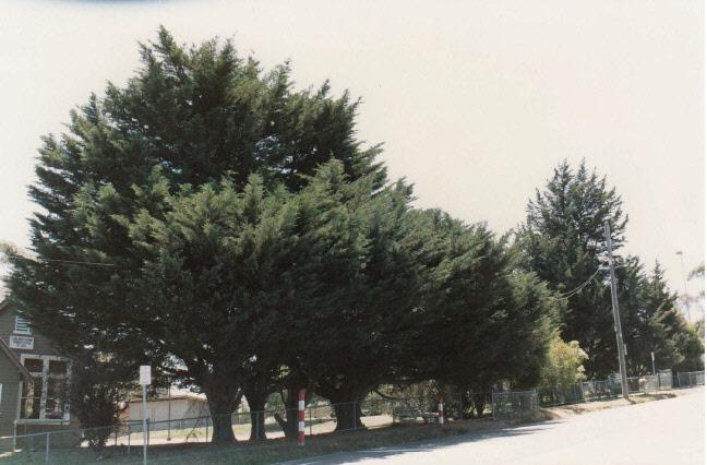 Kangaroo Primary State School Elth Yarr Glen Rd Colour 7 - Shire of Eltham Heritage Study 1992