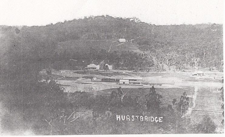 Railways Residence Palm Cypress Trees Hurstbridge Black & White - Shire of Eltham Heritage Study 1992