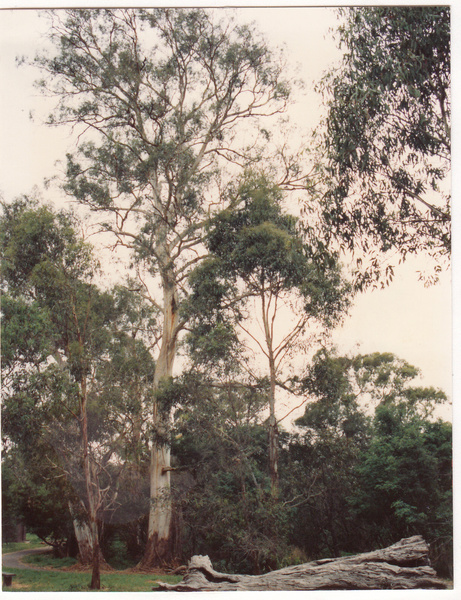 Wingrove Cottage Pines 672 674 Main Rd Colour 4 - Shire of Eltham Heritage Study 1992