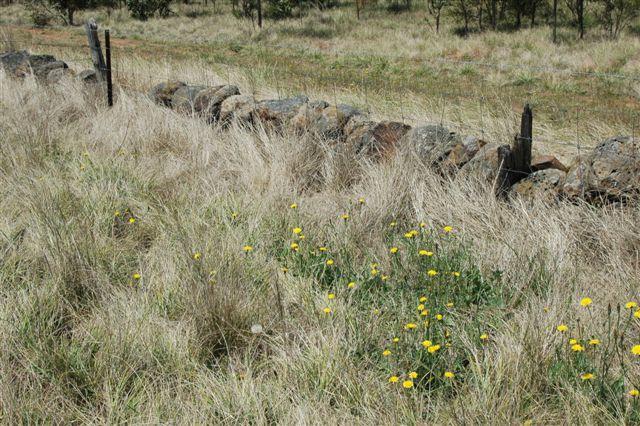 Dry Stone Wall B76