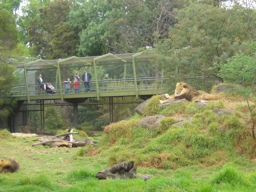 Lion enclosure prior to demolition 2014.jpg