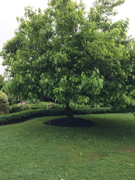 Orchard (2017).jpg
