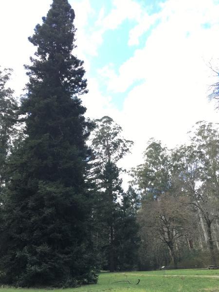2017, Trees at Fernshaw.jpg