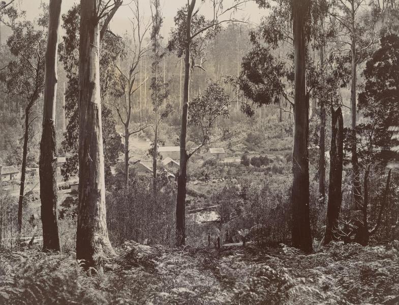 1876 Fernshaw.jpg