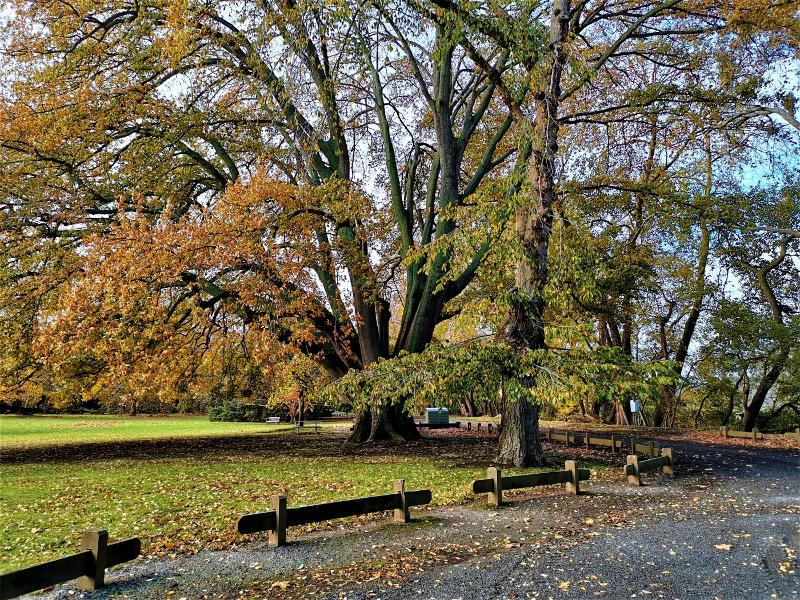 Moss Vale Park