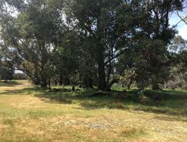 2019 location of asylum cemetery